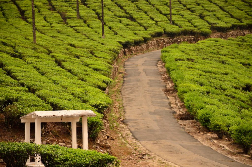 Valparai, tea plantations