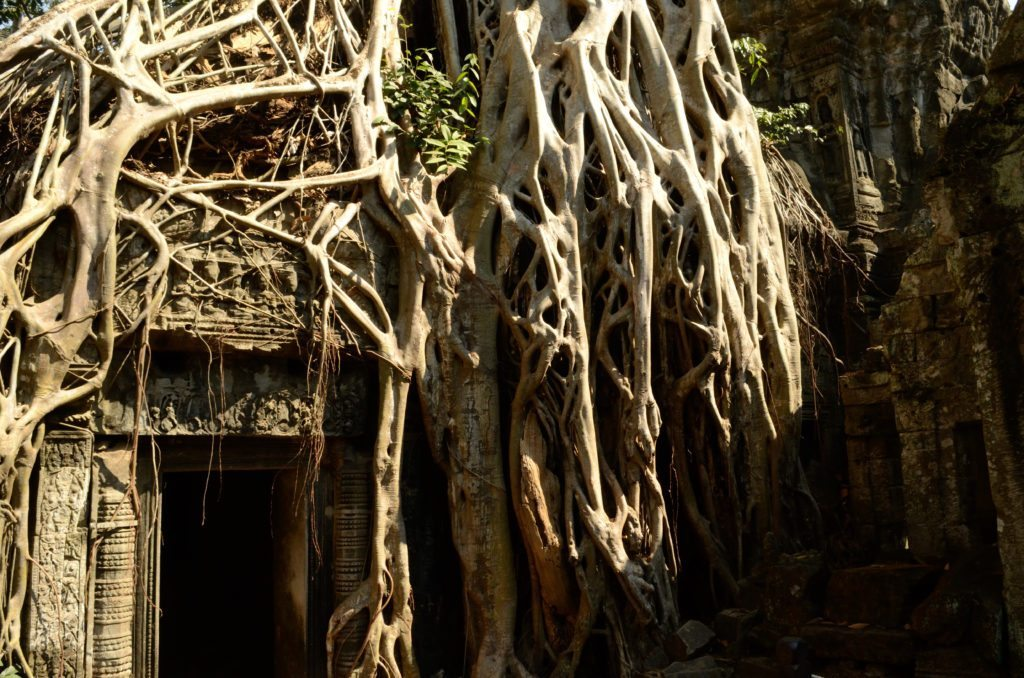Ta Prohm Siem Reap Cambodia, ten things to do in Siem Reap Cambodia