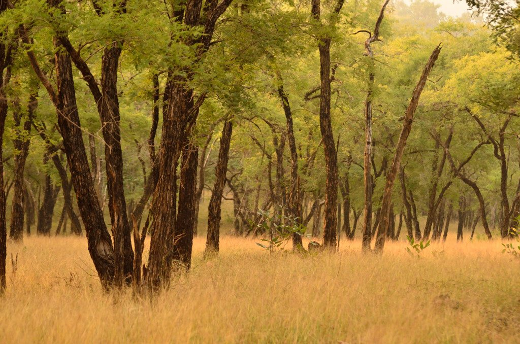 Wild Madhya Pradesh – Looking beyond the tiger